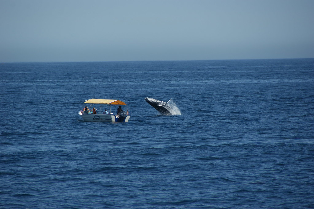 Whale Watching in Cabo San Lucas 03-16-11 by LauraMoncur from Flickr