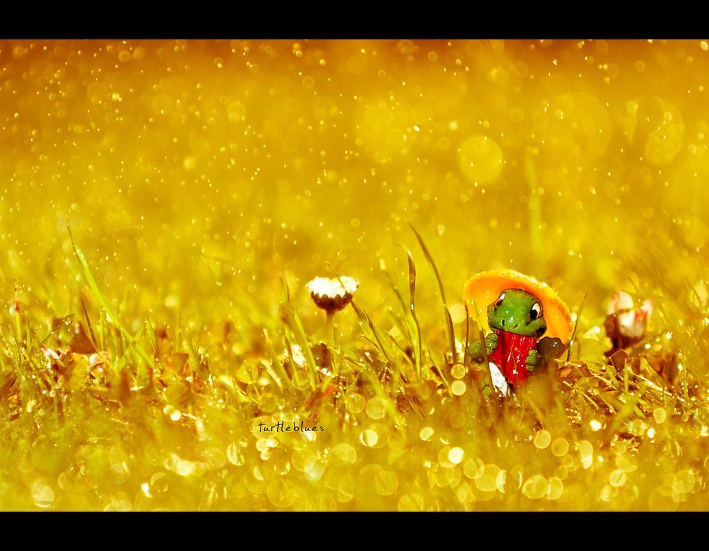 Project 365, 240/365, Day 240, Bokeh, Strobist, Turtle, bokeh bubbles, bokeh balls, warm, sunny, flute, Pan flute, tapsi törtels, ü-ei, überraschungs ei, grass, green, sun, warm, miniature, tiny, odc, ourdailychallenge, canon ef 70-200 f2.8, 200mm,
