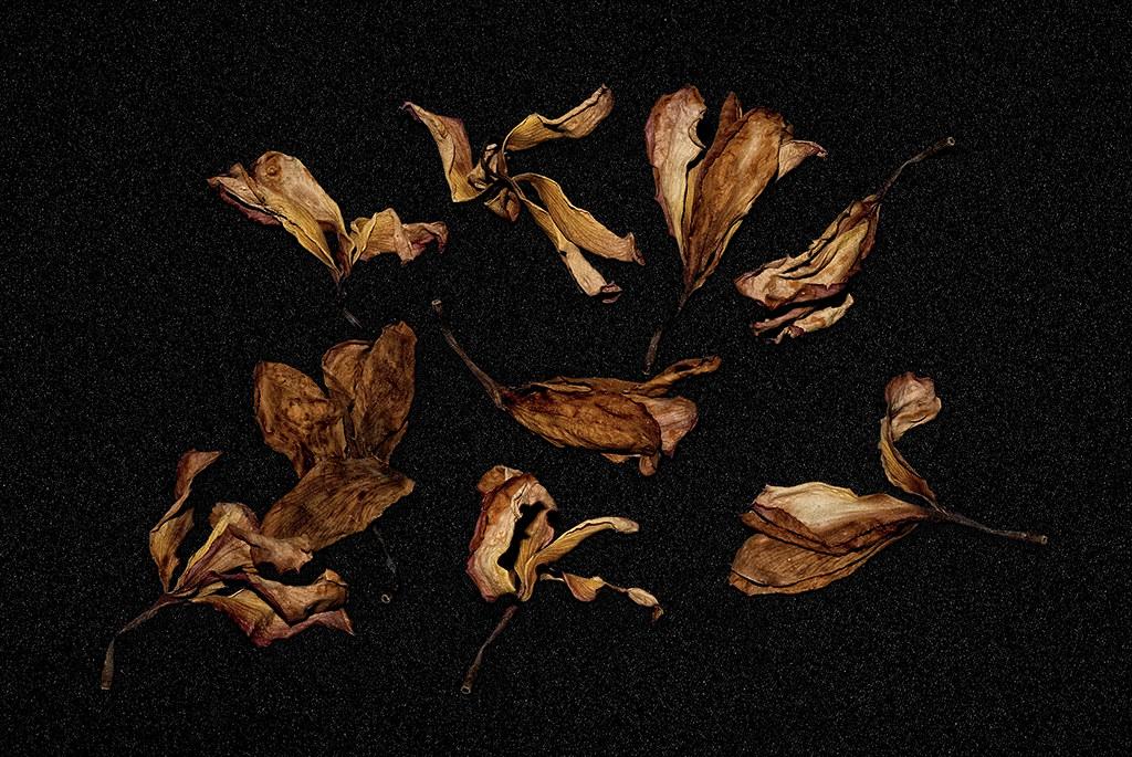 Flores liberadas