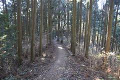栃谷尾根の道