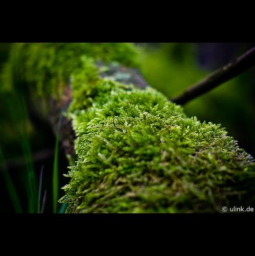 _very_green
