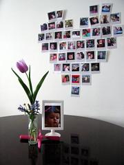tulipano casagroovycasa