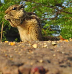 squirrel date #7 (parth joshi) Tags: dawn cycling child squirrell muses desolate mehrauli monumentsindelhi bhattimines adamkhanstomb