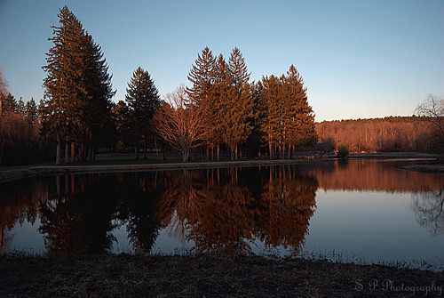 Swan Pond II