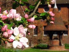 Spring Blossoms at Red House (Laura Nolte) Tags: england house london garden spring redhouse nationaltrust southlondon williammorris artsandcrafts bexleyheath appleblossoms