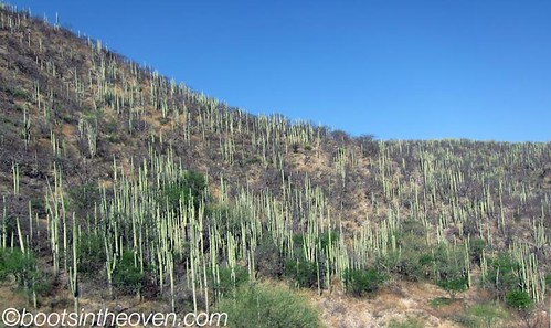 Landscape sproingy with cacti