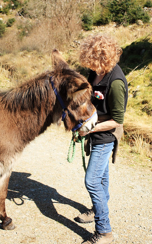 Donkey with human friend