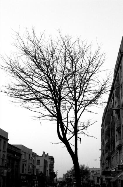 Western Road Tree