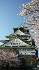 2011.4.7大坂城と桜