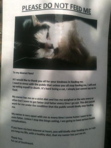 Fat Cat of Southwark