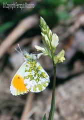 Farfalla (Max©) Tags: nature fauna butterfly flora natura campagna fiori farfalla monti