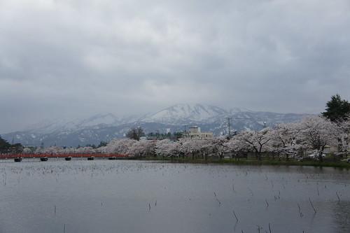 高田の桜と妙高山