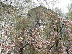 Colorful Spring Flowers, Union Square, New York City (lensepix) Tags: unionsquare colorfulspringflowers newyorkcitycolorfulspringflowersunionsquarenewyorkcity