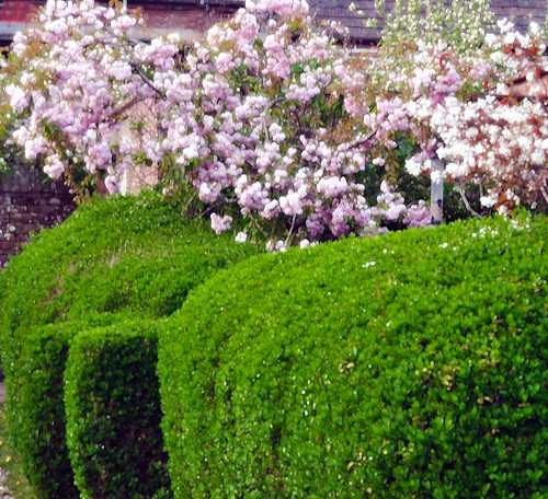 I love our blousey hedge