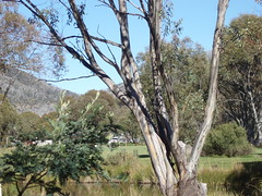 SE NSW 030 (ally portugal) Tags: snowymountains southnsw heidisteahouse lakejidabyne