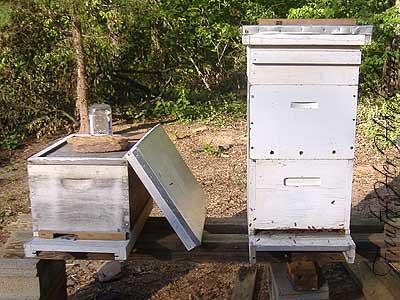 Both hives