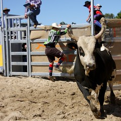 IMG_6242 (Natashatashtash) Tags: rodeo brisbanemeetup daybororodeo2011