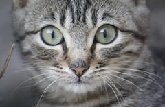 ojos-de-gato-1