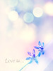 (mintukka) Tags: flowers blue light spring bokeh pastel windowframe scillasiberica softcolors happyflowers lovelyspringtime happyspringtime