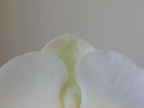 Flower 4of4