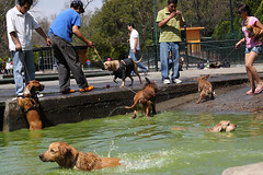 (naye lee) Tags: street people dogs gente perros chapultepec ciudaddemxicocalle