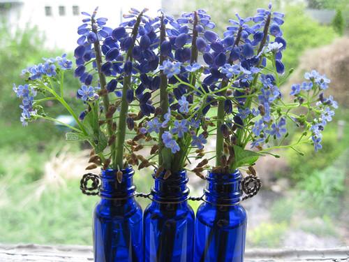 Grape Hyacinths 3