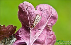 The Insects Resting Place (Pyranha Photography | 1250k views - THX) Tags: canon insect photography eos austria fly leaf sterreich place krnten carinthia rest pause blatt insekt flgel pyranha radenthein 60d pyranhaphotography