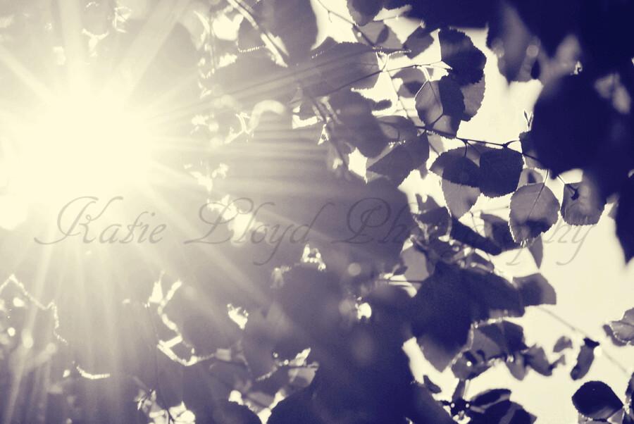 Light-thru-leaves-1
