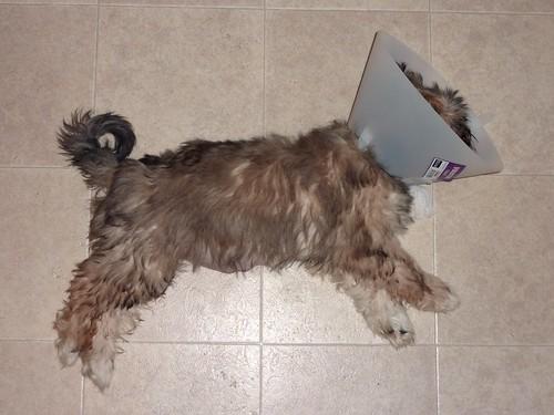 Conehead Nap