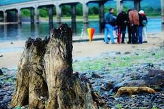 TPS Outing to Valleymount (SuzieSquareHead) Tags: bridge ireland tree june lakes stump wicklow blessington tps 2011 valleymount