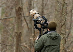 Nikographer (NYMatt) Tags: nikon nikkor 500mm wildlifephotography nikographer gilslandfarm d300s