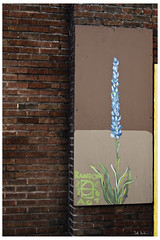 Random Act (swanksalot) Tags: streetart chicago graffiti westloop swanksalot sethanderson