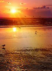 Heaven send a light, let it shine on me (pixelmama) Tags: ocean sea sun seagulls beach birds sunrise sand texas shine sunrays gettyimages padreisland collectivesoul padreislandnationalseashore chasinglight gufofmexico pixelmama heavensendalightletitshineonme