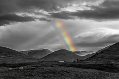 Skittles (Murphy Osborne Photo) Tags: rainbow sheep iceland color black white clouds beams light farm field pasture rain sun