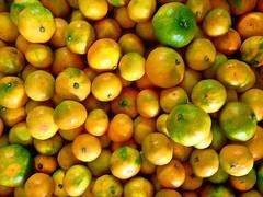 Fall Beauties (anna anton *) Tags: tangerines fall autumn citrus fruit plant mandarinorange vitaminc flora