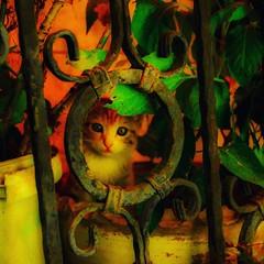 #babycat (kadirÇelen) Tags: babycat