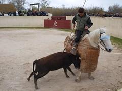P3271030 [1024x768] (Philippe Marc) Tags: mars en dumas hubert marc marco fte 27 arles philippe gilles 2011 leal taureaux tienta fourques yonnet belugue