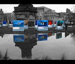 Into the Deep by Steve Bloom (DSC00943) ([Rossco]:[www.rgstrachan.com]) Tags: colour reflection water monochrome edinburgh photographic exhibition pop environment awareness selective standrewsquare intothedeep stevebloom