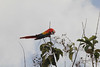 """Macaw Feasting • <a style=""""font-size:0.8em;"""" href=""""https://www.flickr.com/photos/46837553@N03/5578052175/"""" target=""""_blank"""">View on Flickr</a>"""