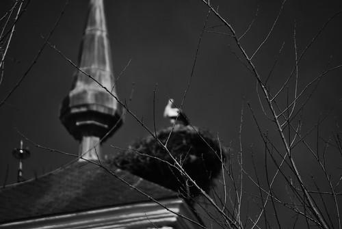La dueña de la torre