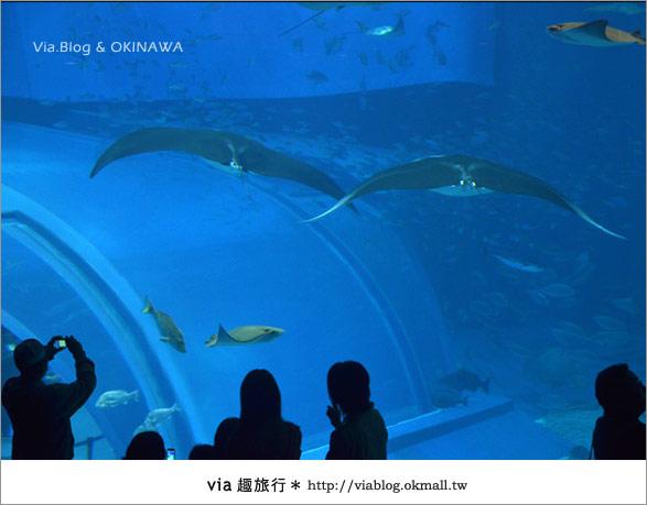 【沖繩景點】美麗海水族館~帶你欣賞美麗又浪漫的海底世界!31