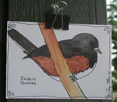 Eastern Towhee Postcard