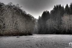 Gloom river (M. Johnston) Tags: trees rain river washington gloom olympicrainforest bogachielriver thewarwithin