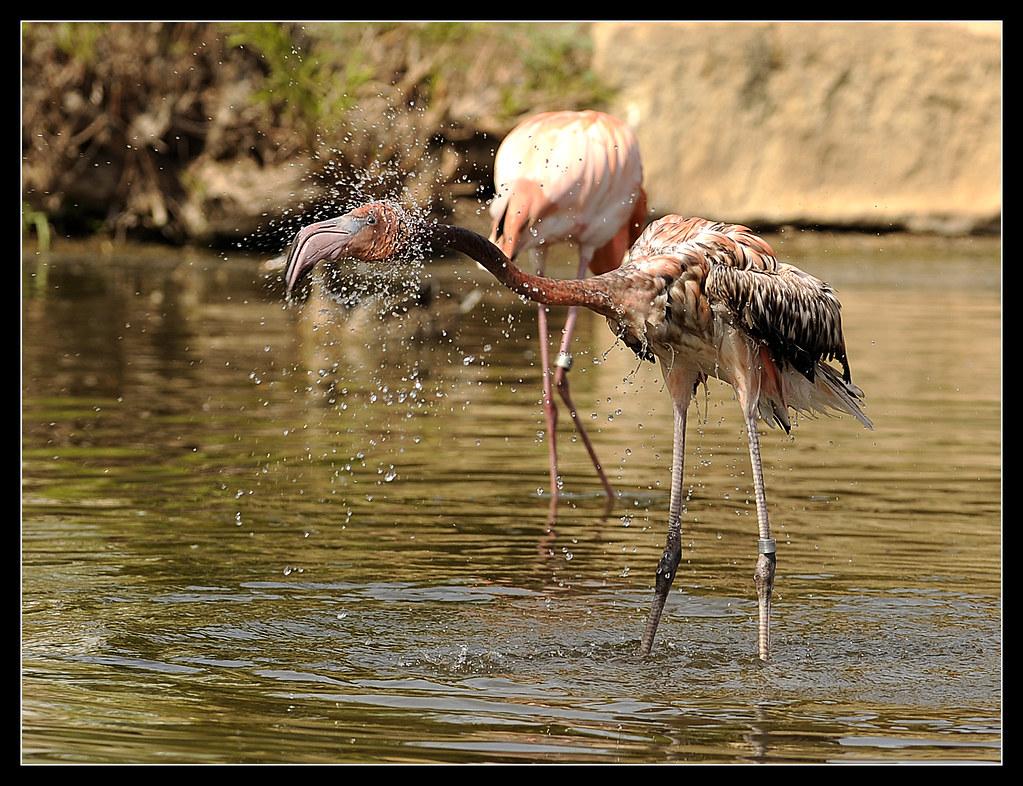 0326_ABLO_Flamingos1