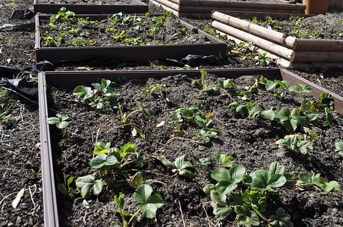 garden April 11 2011 012