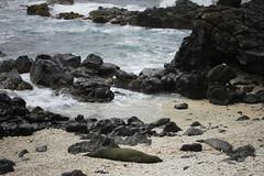 _MG_2774 (Anna Kipervaser) Tags: ocean beauty island hawaii peace oahu tranquility snorkeling pele monkseal