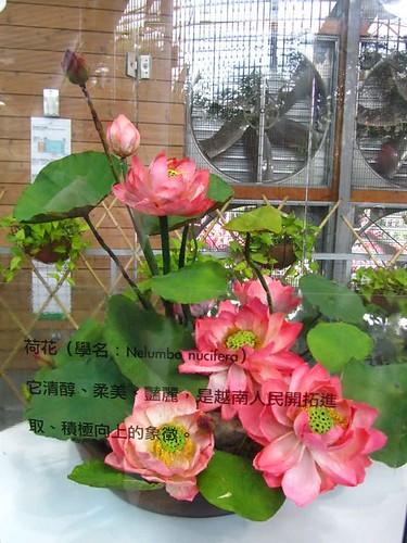 2011台北花博-未來館-荷花.jpg