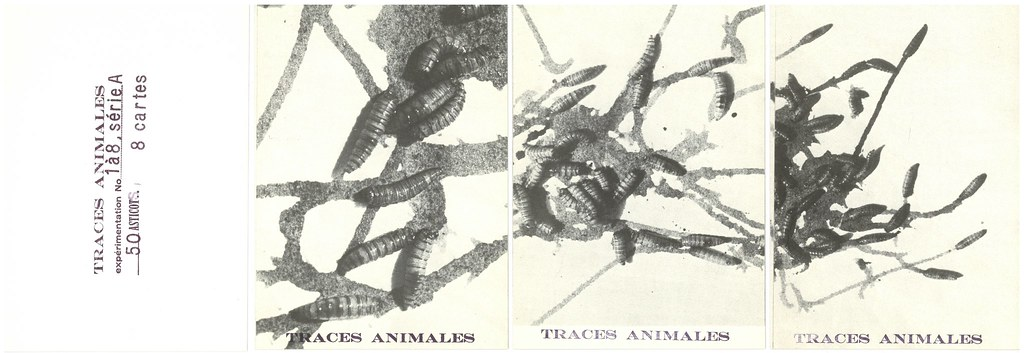 "BAILLY, Bernard J.  Nyon (Self-published) n.d.  ""Traces Animales. Série A: 50 asticots"": 8 postcards in envelope."
