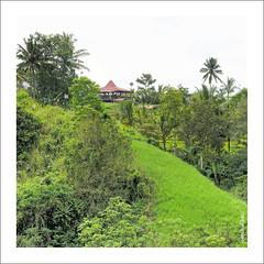 zenubud bali 1240cFDXP (Zenubud) Tags: bali nature canon indonesia asia asie indonesie ubud g11 zenubud