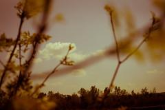 pubblica danza (miglio) Tags: sky alberi clouds nuvole cielo siena 1001nights orcia